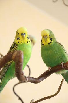 Quaker Parrot This Dad Love Pet Bird Funny Gifts Idea Chris Long Sleeve T-Shirt