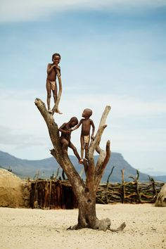 Children of Himba tribe climbing dead tree in their village.