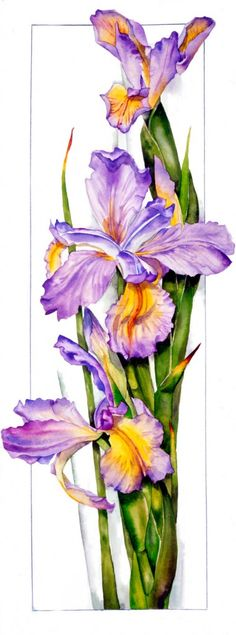 Dutch Iris | Sally Robertson Gallery. w/c
