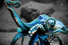 Blue Octopus by anonymous [because people with blogs find it okay to just vomit up shit without giving any credit where its due]