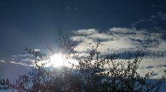 Piccola storia di un olivo in controluce, un giorno di fine novembre