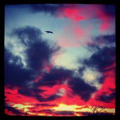 #photo #fun #raven #bird #black #crow #fire #contrast #exposure #october #halloween #new #perspective #desertskies #desert #sky #photography #landscape #sunrise #sunset #weather #hidden #tree #clouds #stars #moon #colorful #nature #rainbow #mountains #horizon #pigpaint