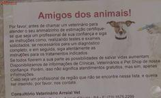 Doença viral sem cura causa mortes de cães no sul da Bahia