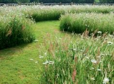 meadows with mown path