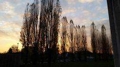 #sunset #trees #cloud
