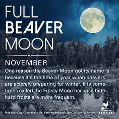 November's full Moon, like other full Moons, is rich in folklore and therefore was given many names. Watch our short video to learn the origin behind this full Moon's names. Full Buck Moon, Full Moon Names, Next Full Moon, November Full Moon, Full Strawberry Moon, Moon Date, Moon Meaning, Full Moon Ritual, Astrology