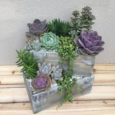 35 Amazing DIY Indoor Succulent Garden Ideas - Garden AboutHow To Use Succulent Landscape Design For Your Home***These succulents are tender soft succulents- meaning they will not tolerate frost.Summertime Project – Build a Playhouse for Your Kids Succulent Landscaping, Succulent Gardening, Container Gardening, Indoor Gardening, Succulent Ideas, Succulent Garden Diy Indoor, Succulent Terrarium Diy, Organic Gardening, Landscaping Ideas