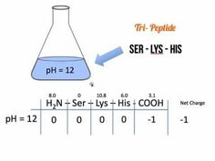 Amino Acids Reference Chart A Reference Chart With All  Amino