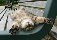 cat on a hot park bench