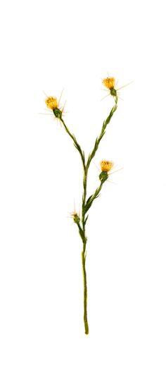 """""""Malas apariencias. 2014. Sumi-e – Tinta sobre seda  en  soporte rígido. 23 x 35cm. Alesso, Dandelion, Flowers, Plants, Antique China, Silk, Ink, Art, Dandelions"""