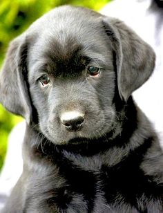 Top 10 Dog Breeds of All Time