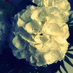 Maailman muhkeimmat hortensiat. <3