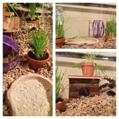 Natural habitat hamster home.  If I ever do caged animals again or once I have kids they want to...this is how I'm doing it.