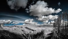 An IR pano image from the Capitol State Forest outside of Olympia Washington