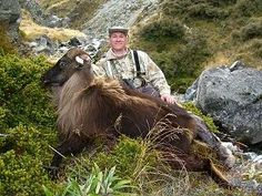 A trophy Himalayan bull tahr from the Lilydale Wilderness Area, on one of my recent hunting trips to New Zealand