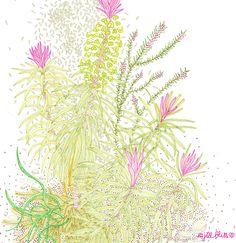 Jill Bliss Succulent Studies 3