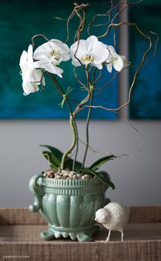 Beautiful!!! And she has a wonderful tutorial for how to dress up your orchid plant.