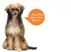 Фотография с проекта http://naturalcore.ru/ посвященного отличному корейскому корму для собак и кошек.