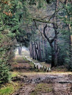 De paden op...... Sallandse heuvelrug nabij Holten