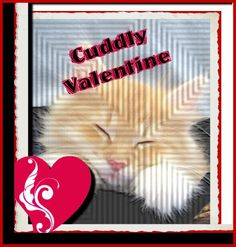Cuddly Valentine