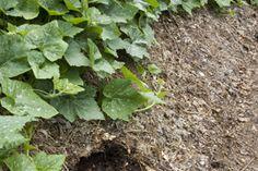 www.rustica.fr - Les feuilles mortes valent de l'or - Couvrir le sol du potager