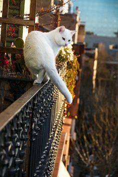 Walk on the balcony