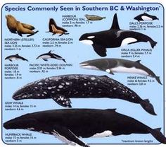 <3 all different kinds of Whales out there<3