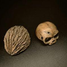 Nut to skull Juglans Nigra, Skull, Art, Art Background, Kunst, Performing Arts, Skulls, Sugar Skull, Art Education Resources
