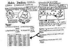 Biomolecules: Protein Coloring Sheet | Cell membrane