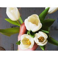 Lovely White Tulips