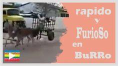 VideoViral:Rápido y furioso en burro--http://bit.ly/1Uppcuy