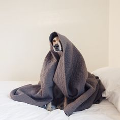 The Blanket Monster, generally nocturnal but if you're...