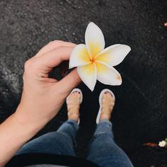 Uma flor pra tua semana começar bem bonita mesmo que tudo indique o contrário. A flor continua bonita mesmo sabendo que caiu do pé e logo murchará. CONCEITUAL VAI DIZER