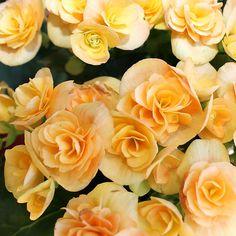#Fiori #Flower #Vivaio #Nursery
