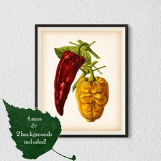 Vegetable art Pepper print Kitchen art by RestoredBotanicalArt