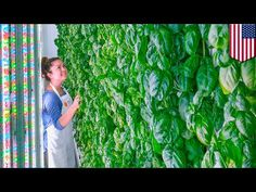 Vertical farming: Plenty receives $200 million investment from tech giants - TomoNews - YouTube