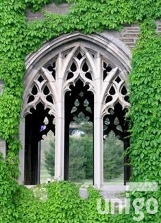 Love the top of this window. Especially the sharpness at the top. - gothic window and ivy  #home