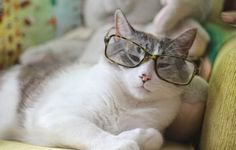 Funny cats: The Science of #Cats