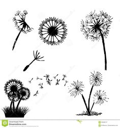 Illustration about Set of Dandelion in the wind illustration. Illustration of background, botany, illustration - 69486747