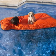 Let's talk about this floating dog pool float. Luxurious pooch much?