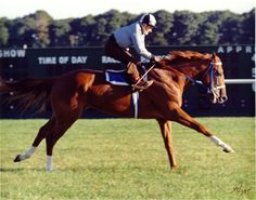 Secretariat. My favorite horse story and movie! What an awesome animal =)