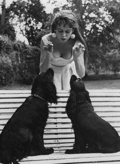1950s. Brigitte Bardot and her black spaniels. Photo by Pierre Boulat (B1924-D1988)