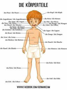 Die Körperteile