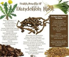 Ever wonder what dandelion root can do to you and how beneficial it can be? Consumer Health Digest brings you the health benefits of dandelion root extract. Dandelion Root Extract, Dandelion Root Tea, Dandelion Jelly, Dandelion Plant, Dandelion Seeds, Healing Herbs, Medicinal Herbs, Dandelion Benefits, Dandelion Recipes