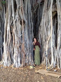 Banyan Trees on Oahu