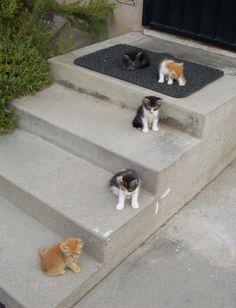 godspeed you! cat emperor