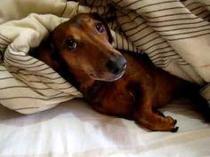 Animal prank dog does not like bath - Video pranks funny