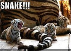 Funny Animal Pictures with Captions » Insomniac Ramblings – My ...
