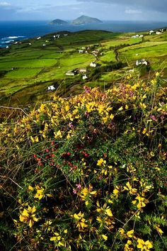 Photographic Print: Wildflowers and Green Fields Along Darrynane Bay, Ring of Kerry, Ireland by Chris Hill : Landscape Photography Tips, Landscape Photos, Landscape Paintings, Landscapes, Travel Photography, Ireland Vacation, Ireland Travel, Vacation Travel, Ireland Wedding