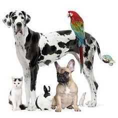 Thema dierendag / dieren in en om huis. juf Ingrid groep 1/2 :: ingridheersink.yurls.net